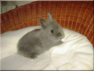 kaninchenbaby.jpg